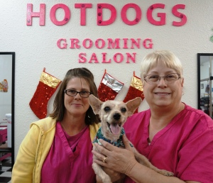 Nate after being transformed by Hot Dogs Grooming Salon