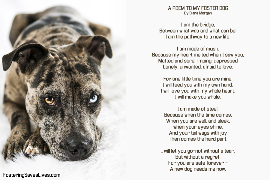 poem to my foster dog