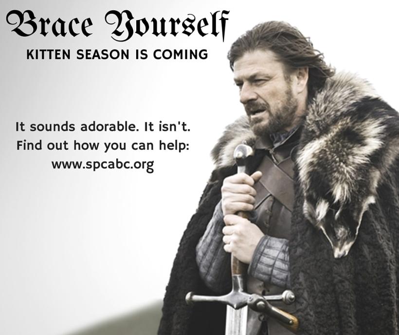 Kitten Season is Coming