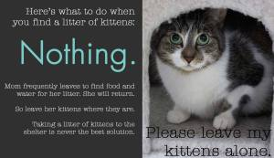 Leave Kittens Alone