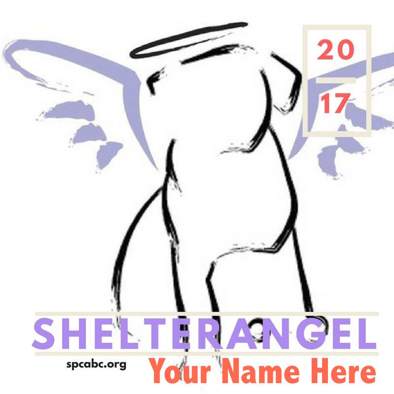Shelter Angel Your Name Here
